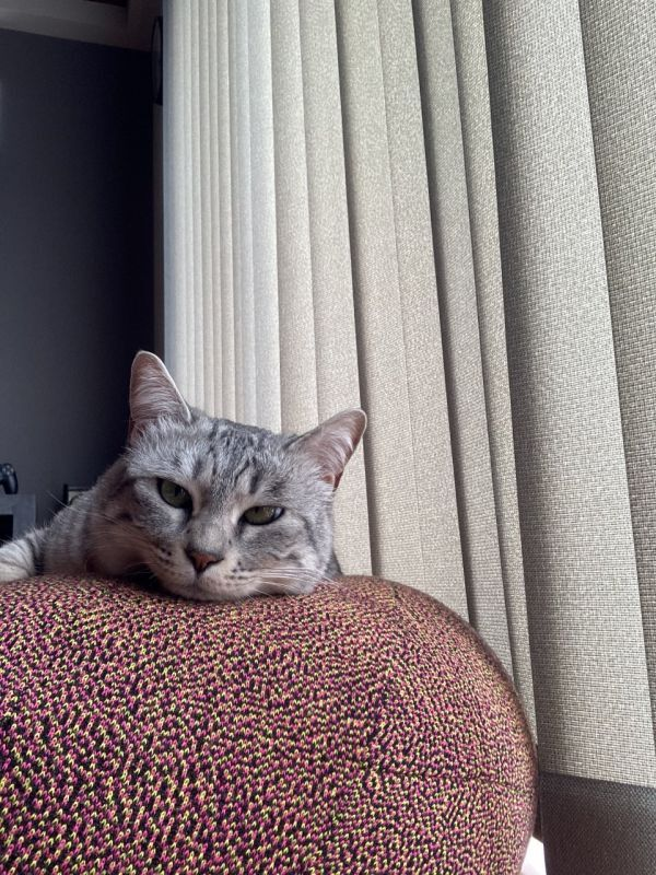 本日の愛猫 たまみ